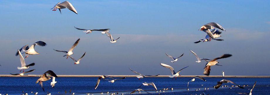 Die Ostsee lockt in schönster Weise.Da lohnt sich selbst ´ne kleine Reise.